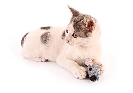 Cat play with mouse (toy) isolated on white photo