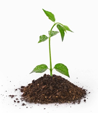 Young plant in ground over white Stock Photo - 7962793