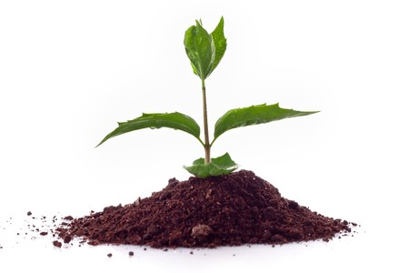 Young plant in ground over white Stock Photo - 7963195