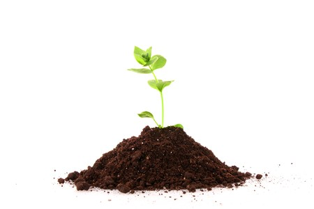 Young plant in ground over white background Stock Photo - 8129006