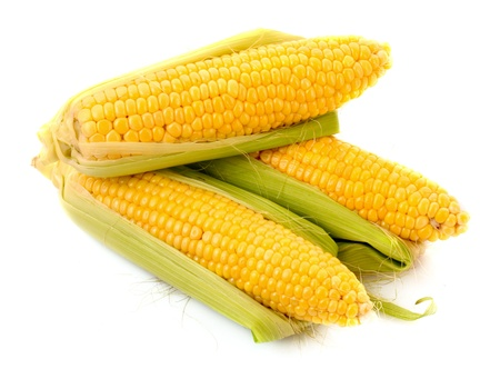 Mais, isoliert auf weiss Standard-Bild