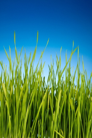 green grass on blue background photo