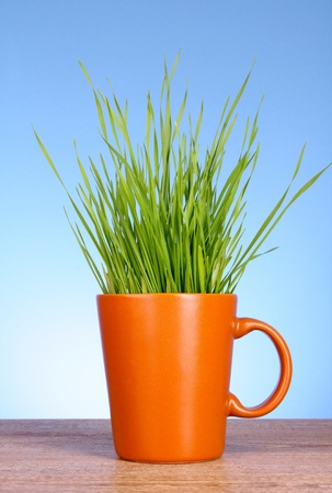 Cup with grass on blue background photo