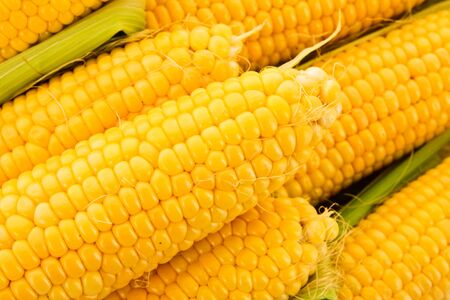 corn yellow: Pocos ma?z amarillo Foto de archivo