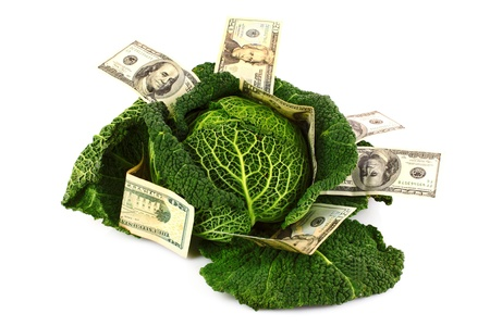 Savvoy cabbage with dollar banknotes isolated on white photo