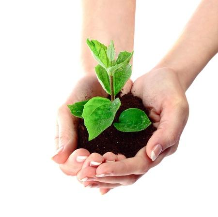 semilla: J�venes de plantas en mano sobre blanco Foto de archivo