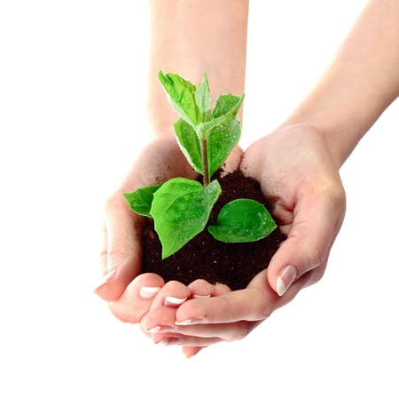 Young plant in hand over white Stock Photo - 9322022