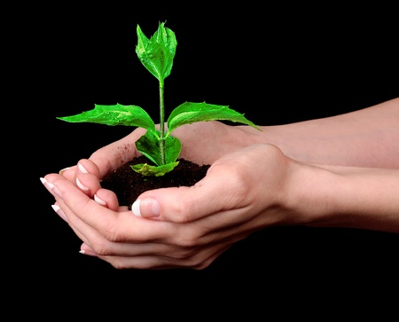 Young plant in hand over black background photo