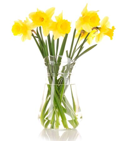 Yellow daffodils in a vase isolated on white Stock Photo - 9453312
