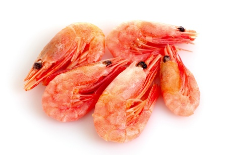 fresh shrimp isolated on white photo