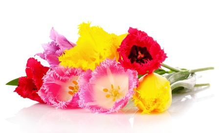 Tulips isolated on white Stock Photo - 9549571