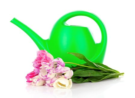 bailer: Watering can with tulips isolated on white