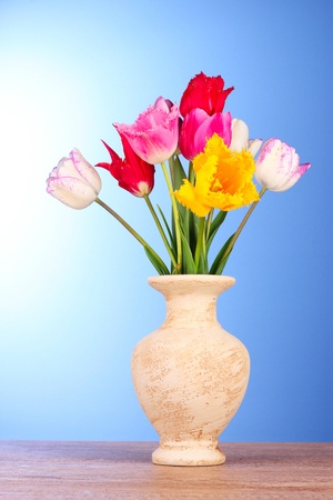 Tulips in vase on blue background photo