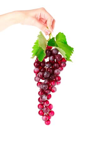 Pink grape cluster in hand isolated on white photo