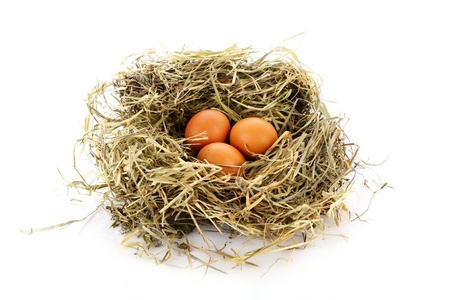 nest egg: Bird nest with three eggs isolated on white