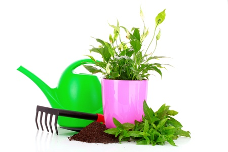 gardening and plant isolated on a white background photo