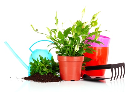 gardening and plant isolated on a white background Stock Photo - 9714559