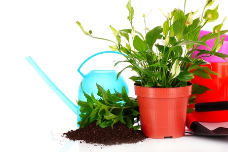gardening and plant isolated on a white background Stock Photo - 9714602