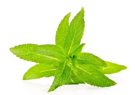 fresh mint isolated on white photo