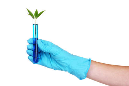 hand with a test tube and plant isolated on white photo