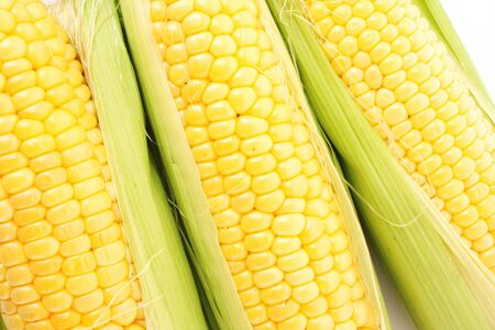 Yellow corns photo