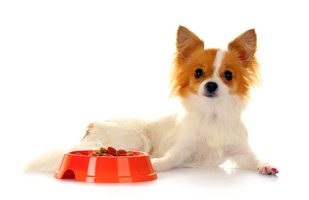 little dog and meal in bowl isolated on white Stock Photo