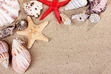 beautiful shells and starfish on sand photo