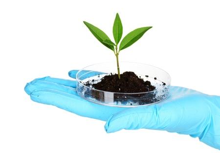 rostlin a ruku v laboratoři na bílém Reklamní fotografie