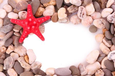 Red seastar on pebble background Stock Photo - 10394982