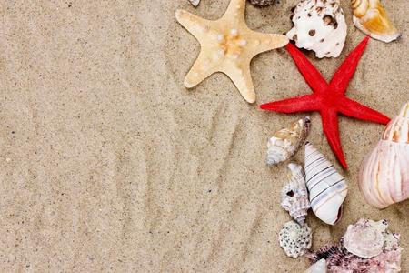 mare agitato: belle conchiglie e stelle marine sulla sabbia