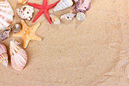 rough sea: beautiful shells and starfish on sand
