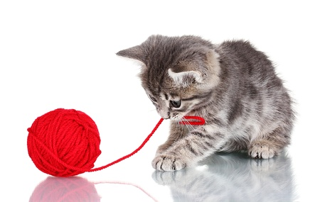 Funny gray kitten and ball of thread isolated on white Stock Photo - 10565117