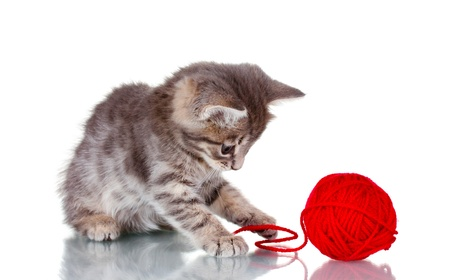 Funny gray kitten and ball of thread isolated on white Stock Photo - 10565367