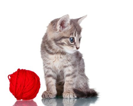 Funny gray kitten and ball of thread isolated on white Stock Photo - 10565375