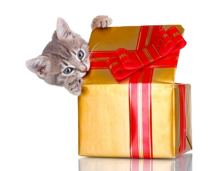 red cat: Funny kitten in golden gift box isolated on white