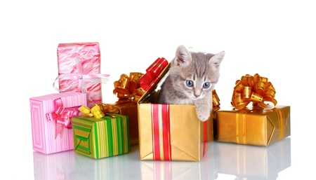 Funny kitten and bright gifts  isolated on white photo