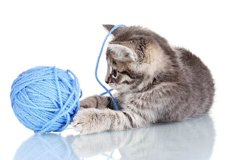 Funny gray kitten and ball of thread isolated on white photo