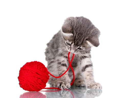 Funny gray kitten and ball of thread isolated on white Stock Photo - 10565284