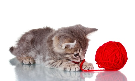 Funny gray kitten and ball of thread isolated on white Stock Photo - 10565368