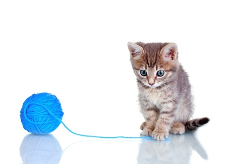 Funny gray kitten and ball of thread isolated on white Stock Photo - 10565501