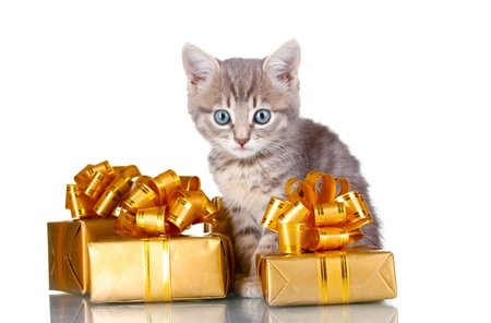 Funny kitten and golden gifts  isolated on white Stock Photo - 10679938