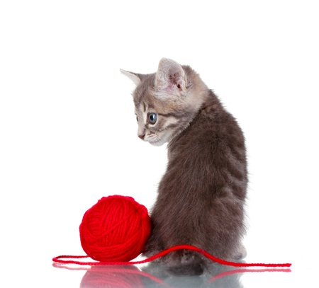 Funny gray kitten and ball of thread isolated on white Stock Photo - 10679451