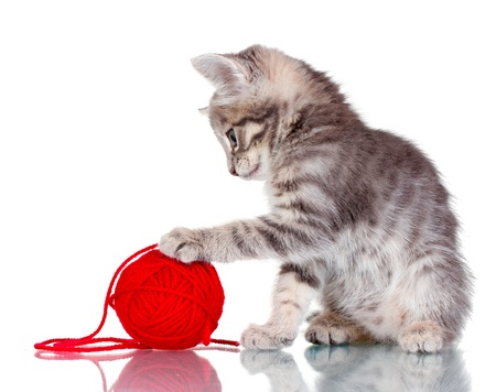 Funny gray kitten and ball of thread isolated on white Stock Photo - 10680028