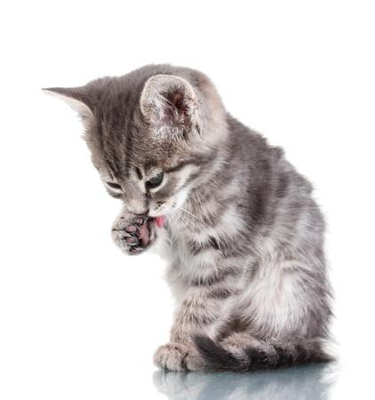 Beautiful gray kitten isolated on white Stock Photo - 10679777
