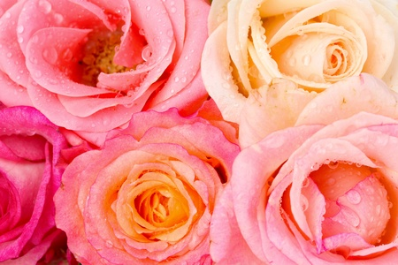 Bouquet of beautiful roses isolated on white photo