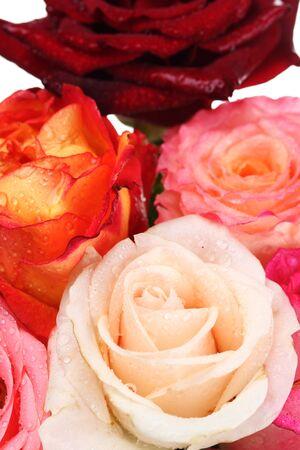 Bouquet of beautiful roses closeup photo