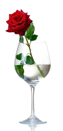 Beautiful red rose in glass isolated on white Stock Photo