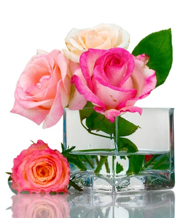 rosa: Beautiful roses in transparent vase isolated on white Stock Photo