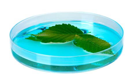 petri dish: Genetically modified plant tested in petri dish isolated on white Stock Photo