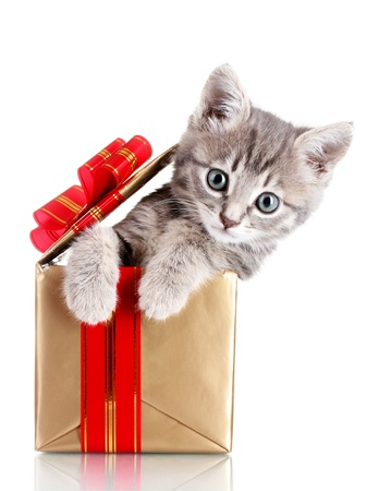 Funny kitten in golden gift box isolated on white photo